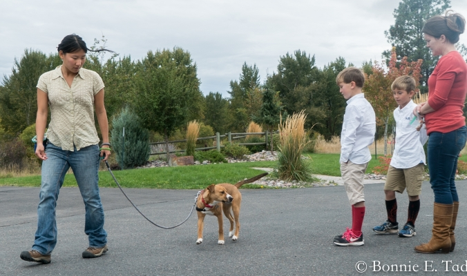 Group Dog Training Classes & Private Lessons | Humane